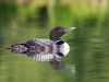 Loons 2015_0009