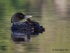 Loons 2015_0049