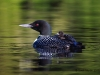 Loons 2015_0109