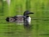 Loons 2015_0192