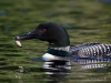 Loons 2015_0390